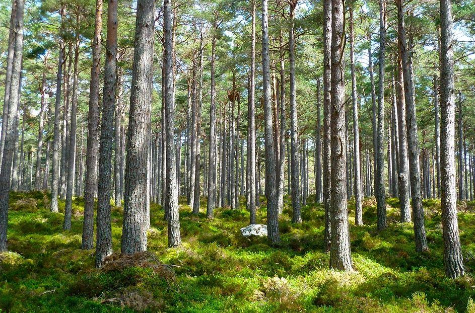 Karttulasta metsään